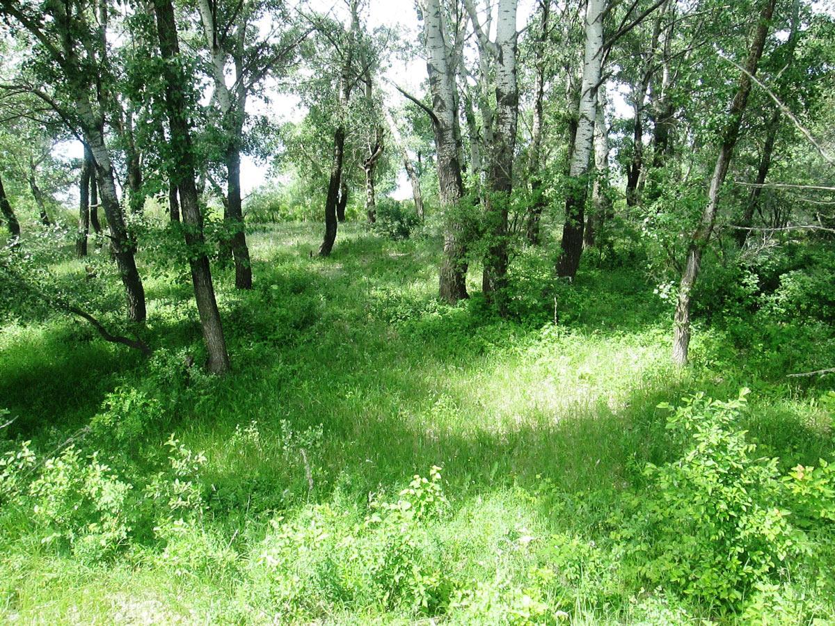 Окрестности села Лятошинка Волгоградской области